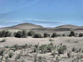 sanddunes near Bahia Creek