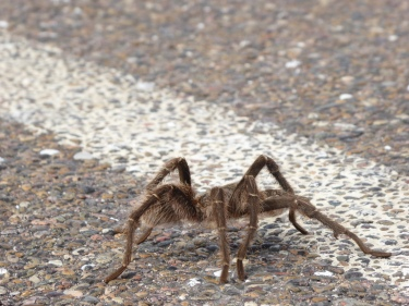spider on the street